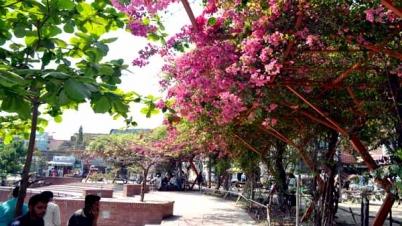 বসন্তে লেকপারে 'বোগানভিলার' বাহার